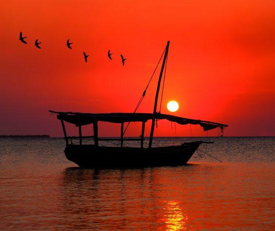 Sunset RobinZT0101